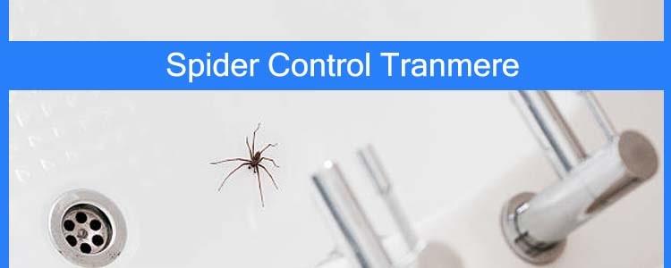 Spider Control Tranmere